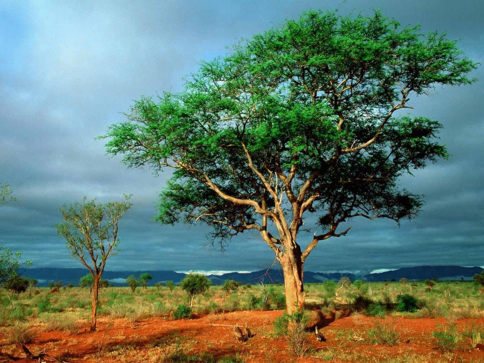 Юридические права природы