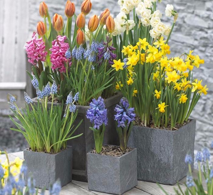 Как и когда сажать тюльпаны и лилии
