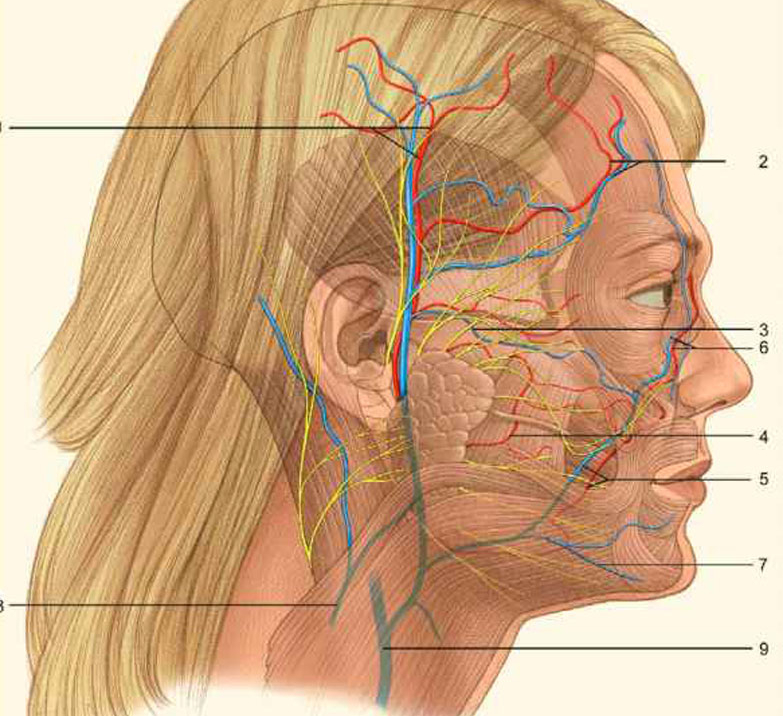 Babes tits facial nerve reconstructiontures girls