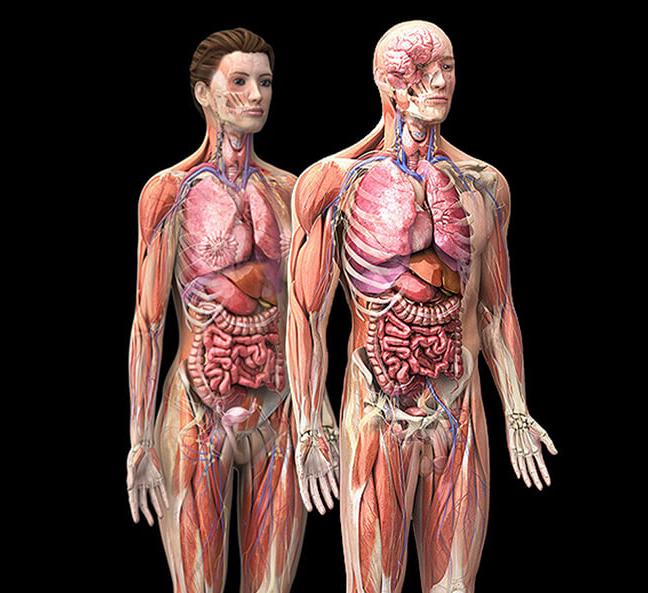 картинки органов девушки большинстве случаев