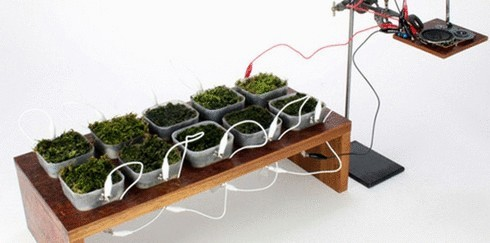 Ученые создали первое в мире растительное радио