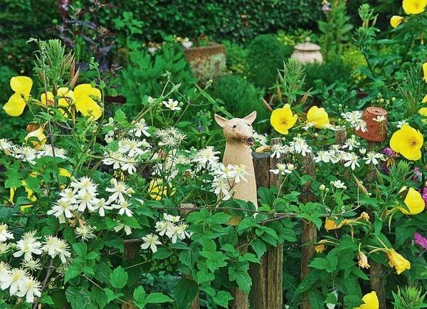Клематис в вашем саду, или Да здравствует король!