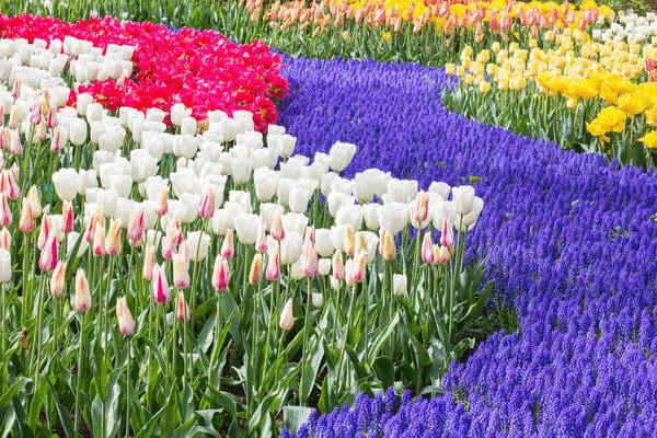 С помощью цветов легко передать саму идею воды