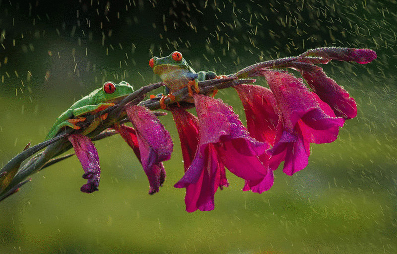 frog-photography-23__880