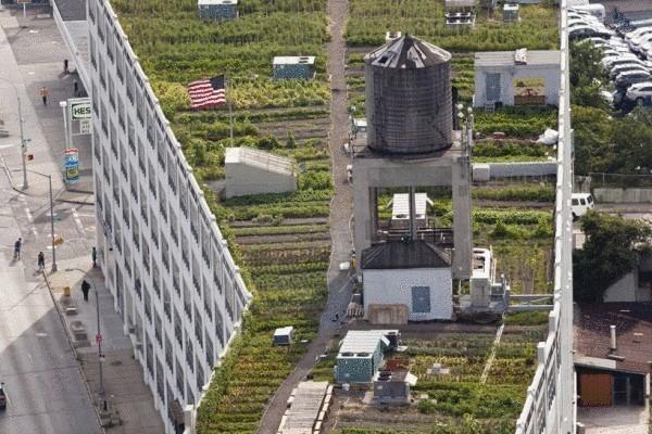 Огород 2,8 га на нью-йоркской крыше