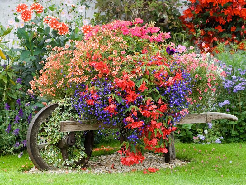 15 цветочных спецэффектов для украшения сада