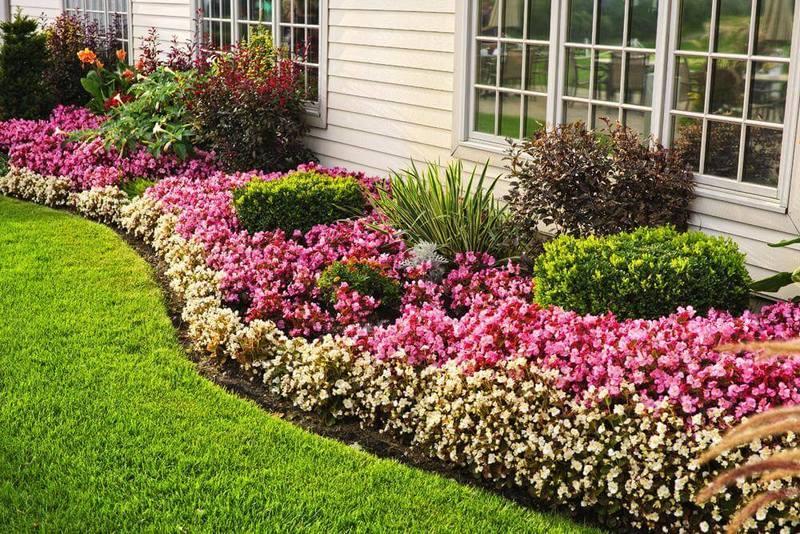 Самые неприхотливые цветы для сада: подборка сортов для «ленивых» садоводов