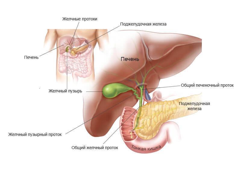 Застой желчи: как избавиться от холестаза