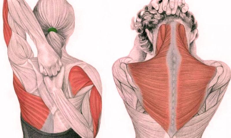 Картинки по запросу Упражнения для шеи: Освобождают от зажимов и нормализуют давление