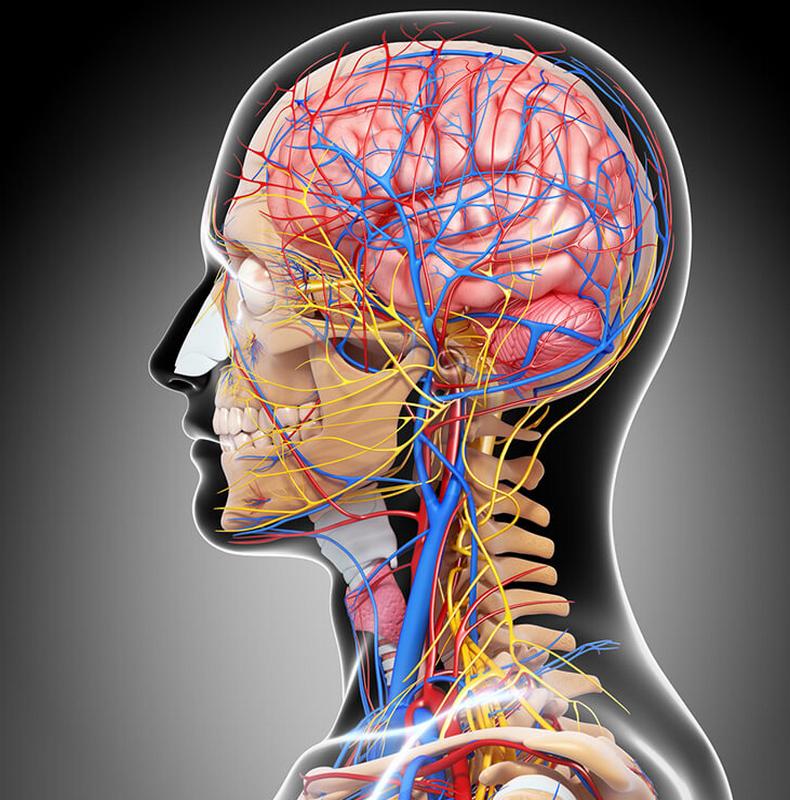 Очистка сосудов головного мозга маслом черного тмина: Простой рецепт