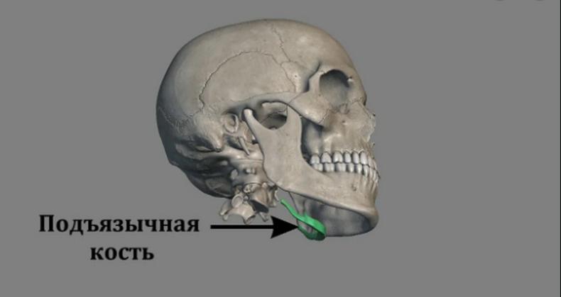 1 упражнение на подъязычную кость уберет второй подбородок