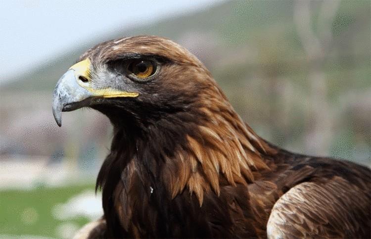 Три четверти видов птиц могут полностью исчезнуть