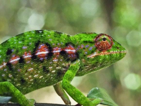 Мадагаскар — загадка биоразнообразия