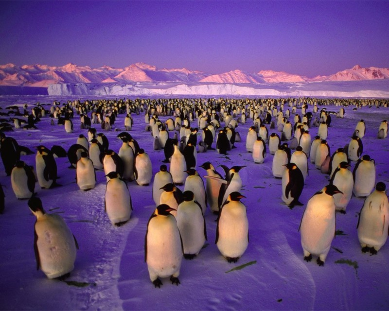Как сохранить море Росса и другие воды вокруг Антарктиды