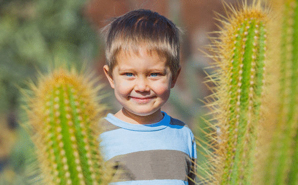 комнатные растения в детской